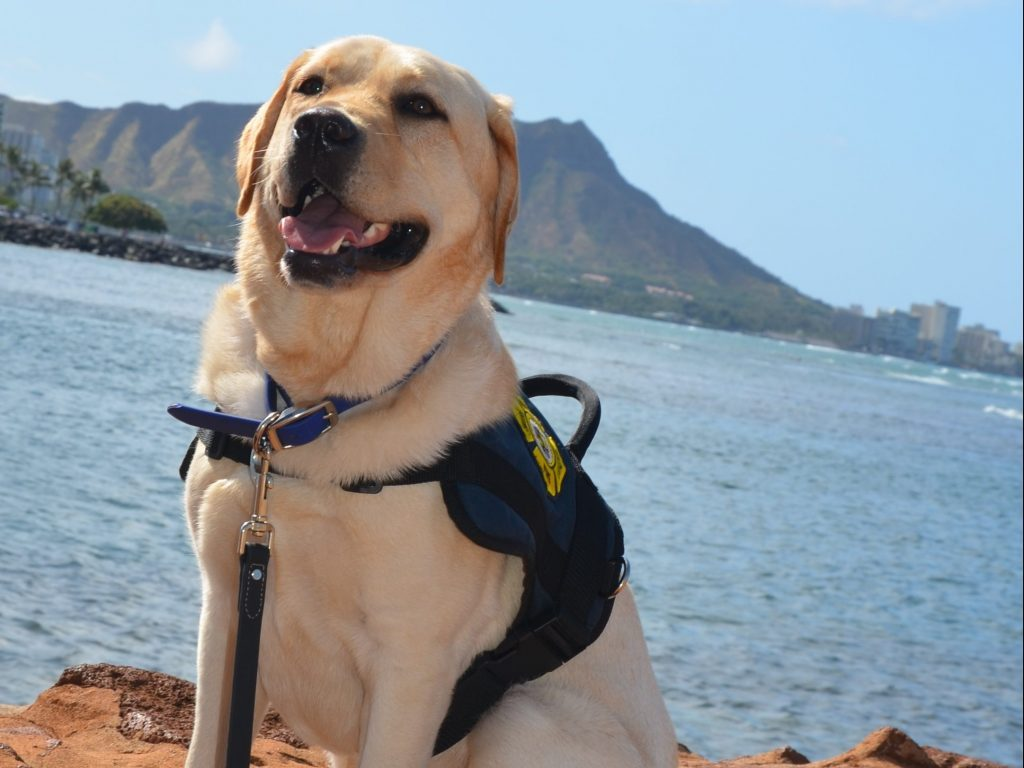 HFD fire dog Kukui with Diamond Head in the background